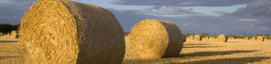 alfalfa – Boundary County Agriculture