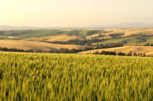 Palouse view