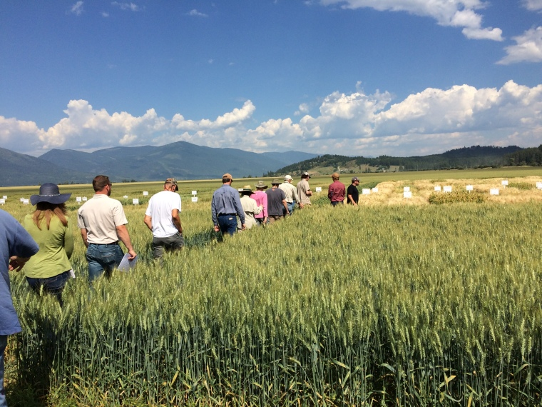 Boundary County Variety Trials Field Day